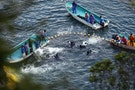 Japan Dolphin Hunting Season Starts and Two Conservationists Are Rejected Entry