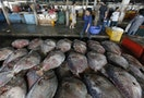 28% of the Fish Indonesians Consume Are Full of Plastic and Debris