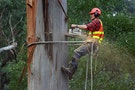 Taiwan will Hold its First Chinese Arborist Exam Next Month