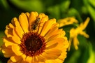 Taiwan Researchers Prove Slightest Amount of Pesticide Harms Bees