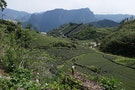 High Mountain Tea Plantations Destroyed by Government