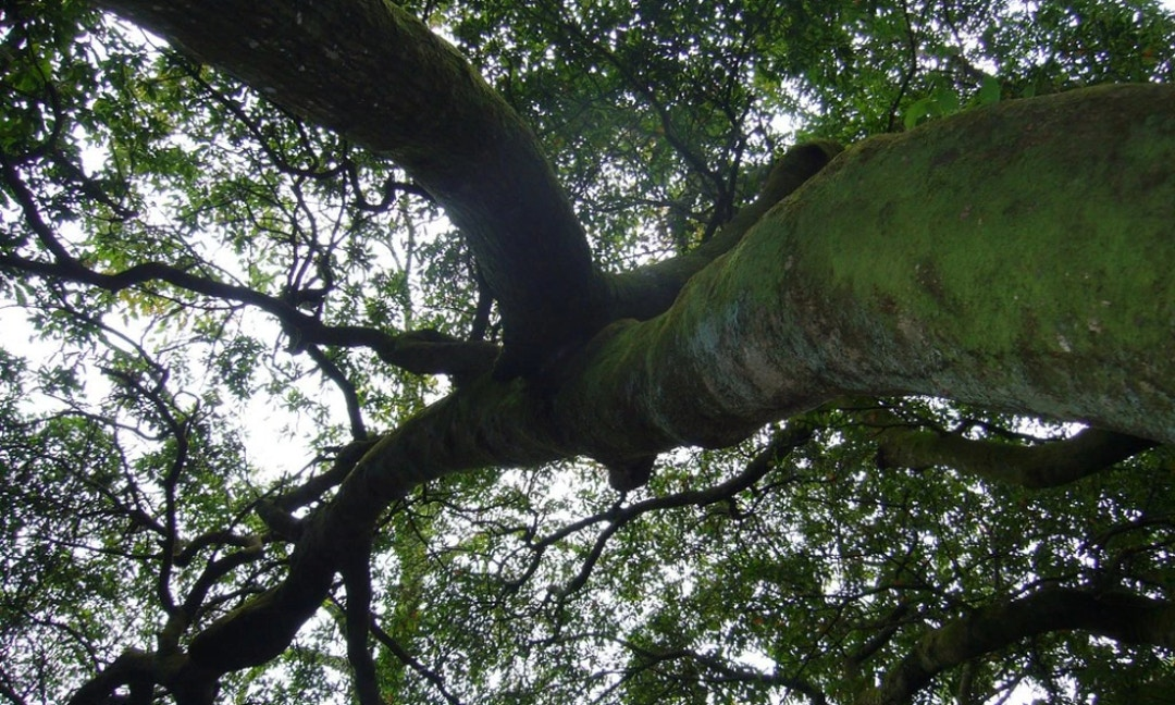 How Trees Help Solve Murders The News Lens International Edition