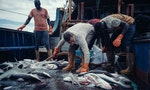 Legal Loopholes Lead to Human Rights Abuses on Taiwanese Fishing Boats: Report