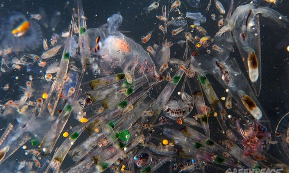 OP-ED: Plastic Waste Turning Seas Toxic