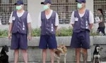 Taiwan Prison Dog Training Helps Inmates Stay Away from Crime