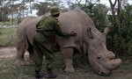 Two to Tango: Skewed Sex Ratio Spells Danger for Rhinos in India