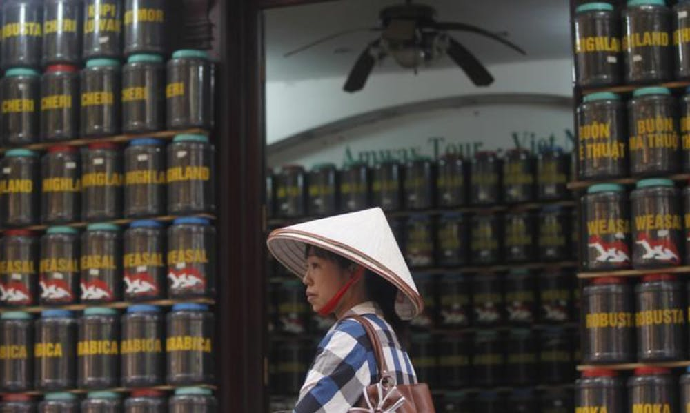 Coffee Production in Vietnam Faces Dark Future Under Climate Change