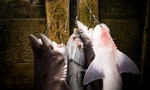 Singapore's Massive Role in Trading Shark Fins Exposed