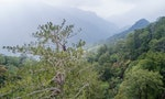 Saving Taiwan's Forests from the Treetops