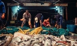 OPINION: No Easy Solution to the Fish Stock Problem