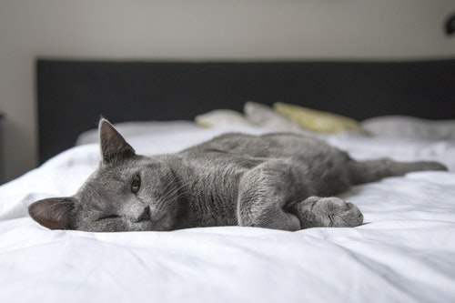 adorable-animal-bed-236606