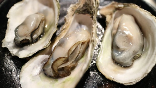 oyster_shell_clams_dry_bay_seafood_sea_p