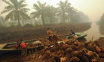 INDONESIA: Report Exposes Multinational Brands' Exposure to Palm Oil Abuses