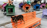 Stray Dogs Hound Taiwan after Euthanasia Ban Takes Effect