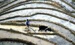Crops in Central China's Rice Belt Soaked in Toxic Mercury
