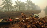 INDONESIA: Palm Oil Linked to Deforestation Remains on Store Shelves