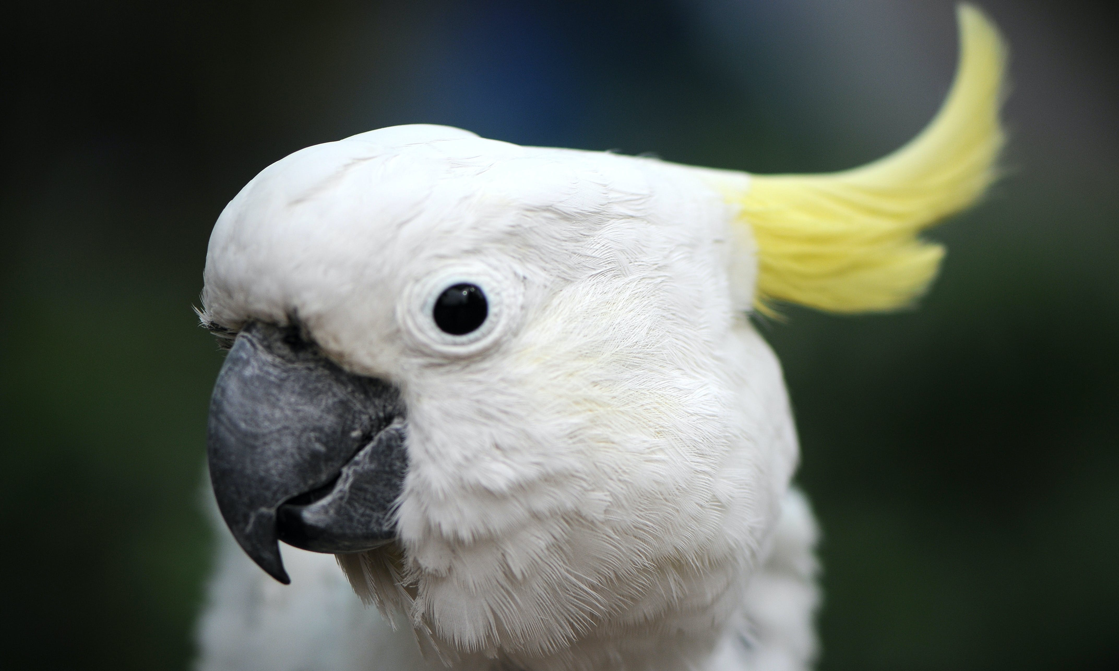 INDONESIA: What Happens to Pet Cockatoos Confiscated From Smugglers?