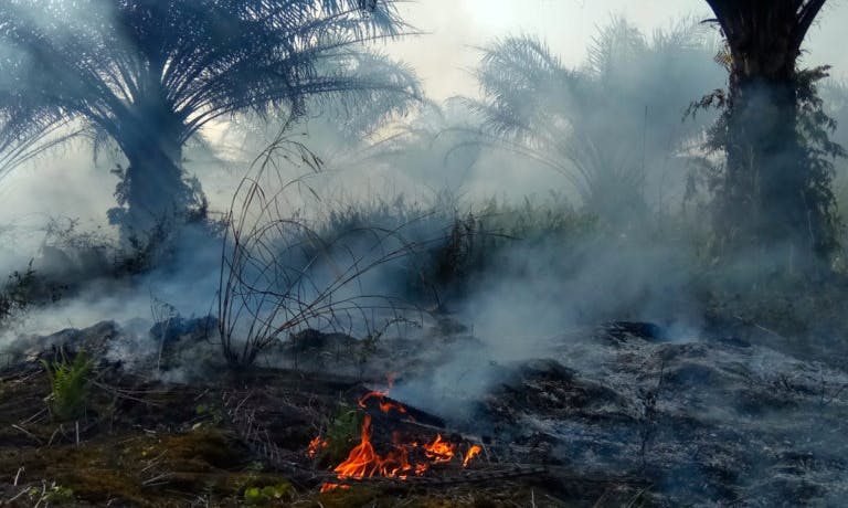 Asian Banks Are Giving Billions to Companies Linked With Deforestation