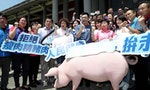 Taiwan's Opposition Party Says No to American Pork